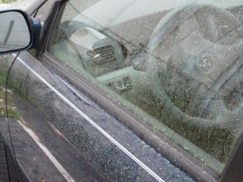 Take a look outside at your car. It's covered with pollen and you don't have to park under a tree for that to happen.